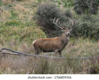 Hunting in New Zealand - Trophy Red Stag seen in the upper Rangitata River Valley, Canterbury