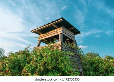 Hunting perch in raspberry bush at blue sky. Location: Germany, North Rhine-Westphalia, Borken