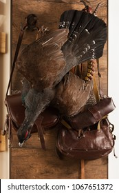 Hunting trophies and equipment hang on wall. Hunting of capercaillie. Vertical.