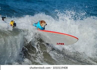 Huntington Beach, CA - September 23, 2017 Surf City Surf Dog Surfing Contest