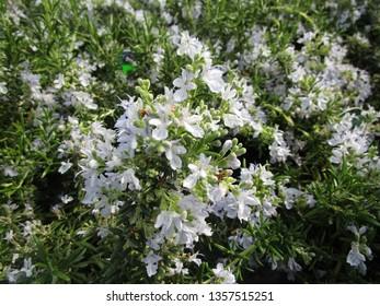 Huntington Carpet Rosemary Light Blue Flowers 2019