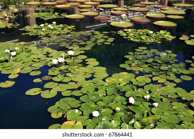 Huntsville Botanical Gardens , water pond , lilies and blooms