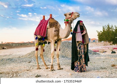 Hurghada, Egypt - Jan 28, 2020: Old bedouin woman walking with a two-humped camel in the eastern desert of Egypt.