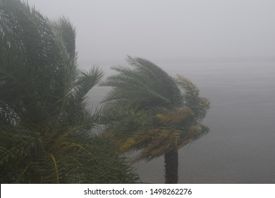 HURRICANE DORIAN:  South Florida, September 2, 2019 - Trees during storm, wind and rain - Tropical Storm from HURRICANE DORIAN
