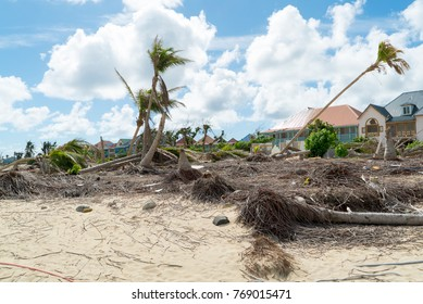 Hurricane Irma aftermath destruction to some of st.maarten/stmartin beaches blowing down trees and uprooting some on the beach of orient bay
