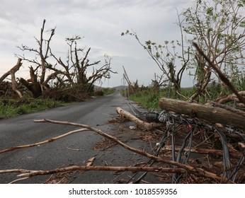 Hurricane Maria Debris