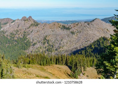 Hurricane Ridge hiking trail at Olympic National Park in the Pacific Northwest