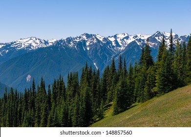 Hurricane Ridge of Olympic National Park in Washington, USA
