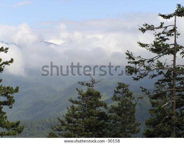 Hurricane Ridge scenic view in  Olympic National Park in  Washington state,  USA
