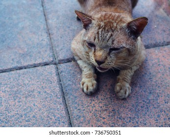 Hurting stray dirty brown fur cat, with tear staining wound, moaning, opening its mouth, lying on grey red tile floor background, evening cold sunlight