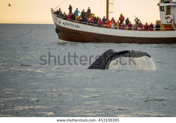 HUSAVIK, ICELAND - JUNE 15, 2016: Whale watching scene, with tourists, near Husavik, northeast Iceland
