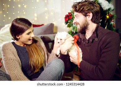 Husband giving a cute and sweet puppy dog to his wife at christmas
