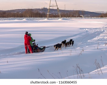 Huskies in harness Murmansk, Russia Mar 2018