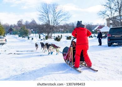 Husky dog sledding in snowy Russian city