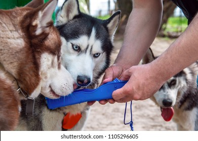 Husky dogs drink water from a plastic Portable Pet Dog Travel Water Drink Bottle. Bowl Dispenser Water Drinker
