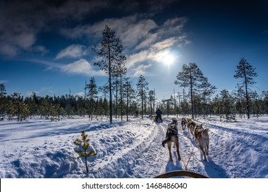 Husky dogs in Northern Finland - safari with huskies