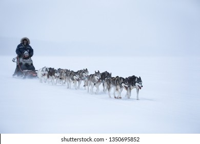 Husky dogs pulling a sleigh in snow in winter