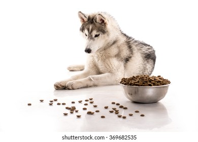 Husky puppy and his favorite food on a white background