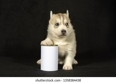 Husky puppy sits with billboard can in front of black background