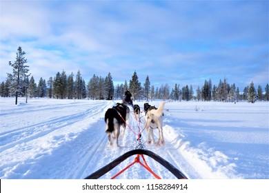 The Husky Safari Activity at Lapland Finland