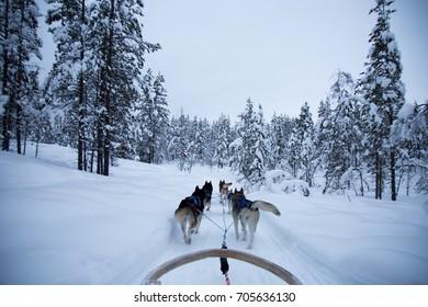 Husky Safari | Snow Sledge