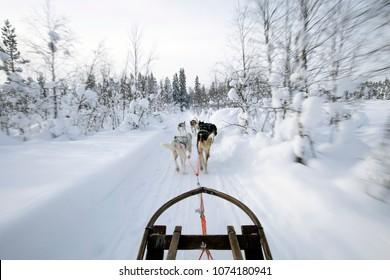 Husky Sledge ride in Swedish Lapland