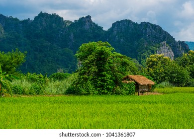 The hut among field rice and behind have limestone mountain and sky is cloudy at Ban Mung,Noen Maprang District,Phitsanulok,Thailand