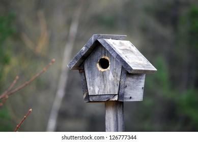 Hut bird