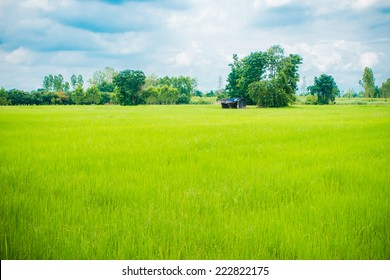 Hut in the green field