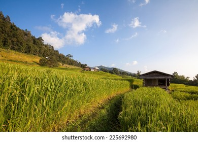 Hut in green terraced rice field during sunset at Chiangmai, Thailand