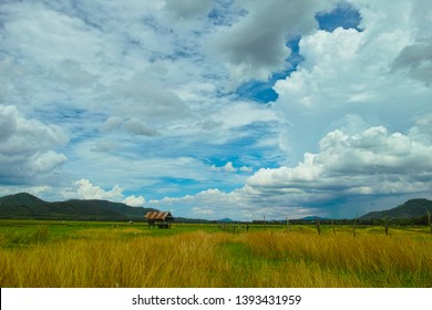 A hut in the meadow under the blue sky and cloud.