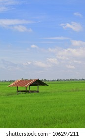 hut in paddy blue sky