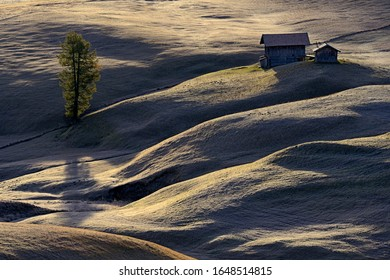 A hut and a tree in alpine pastureland