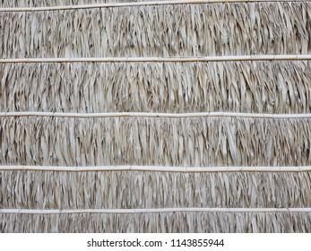 hut wall palm leaps