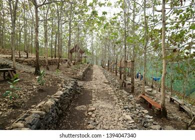 Hutan Pinus Dlingo. Beautiful forest in jogjakarta Indonesia