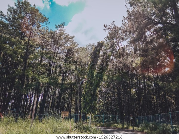 Hutan Pinus Mentaos Pines Forest Middle Stock Photo Edit Now 1526327216