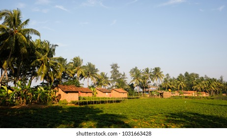Huts for tourist next to the sea, surrounded by coconut trees and crops. Gokarna (Karnataka, India)
