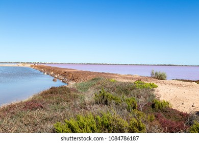 Hutt Lagoon is a pink lake which boasts a pink hue created by presence of carotenoid-producing algae Dunaliella salina,