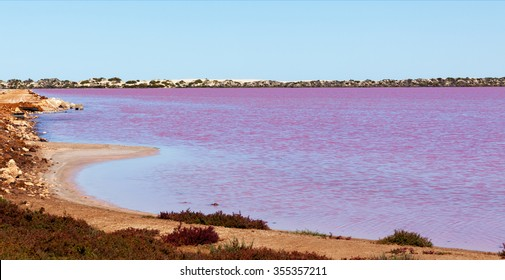 Hutt Lagoon is a pink lake which boasts a pink hue created by presence of carotenoid-producing algae Dunaliella salina. One of many pink lakes in western Australia