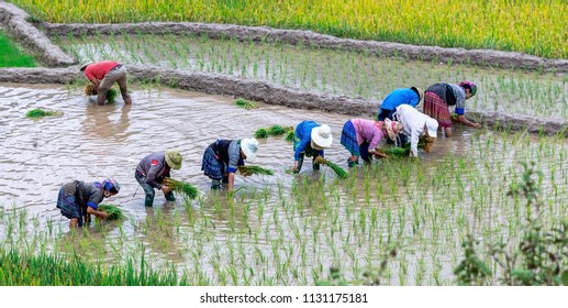 HUYEN MU CHANG CHAI, VIETNAM - JULY 10, 2018: Rice fields on terraced. Fields are prepared for planting rice. Lim Mong, Northen Vietnam