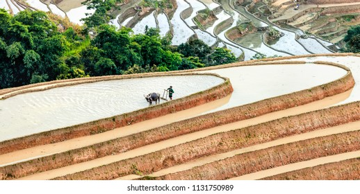 HUYEN XIN MAN, VIETNAM - JULY 16, 2018: Rice fields on terraced. Fields are prepared for planting rice. Ha Giang, Northen Vietnam