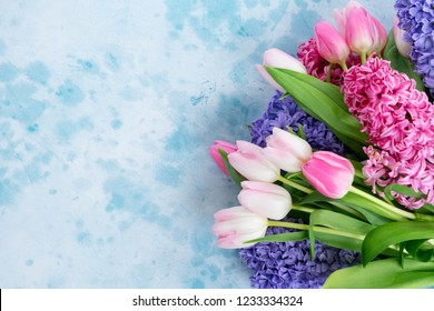 Hyacinth blue and pink flowers on blue background with copy space