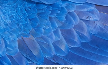 Hyacinth macaw wing feathers