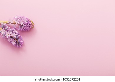 hyacinth  on paper background