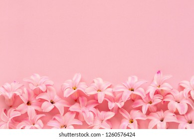 Hyacinth Pink Surprise Dutch Hyacinth. Spring bulbs. Spring flowers. The perfume of blooming hyacinths is a symbol of early spring. Texture. Pink flowers on a light pink background