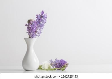 hyacinth in vase on white background
