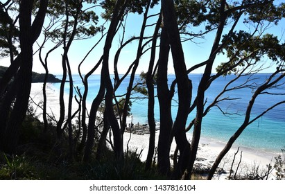 Hyams Beach is a seaside village in the Shoalhaven, on the shores of Jervis Bay with beautiful white sand. Trees in the foreground.