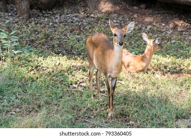 1000 Nehru Zoological Park Pictures Royalty Free Images Stock