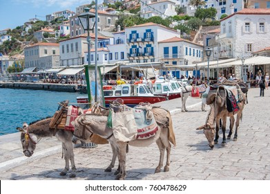 HYDRA, GREECE - MAY 30: The harbor on May 30, 2009 in Hydra. Hydra is a Greek island in the Aegean sea.  Motor vehicles are not allowed on the island and donkeys are the main means of transportation.