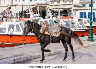 Hydra Island, Greece - October 17, 2018: A beautiful mule standing in the harbor on the enchanting Greek island of Hydra, where no cars are allowed and mules are the main source of transportation.